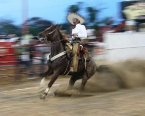 Cala de caballo