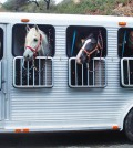 consejos-subir-y-transportar-caballo-en-remolque