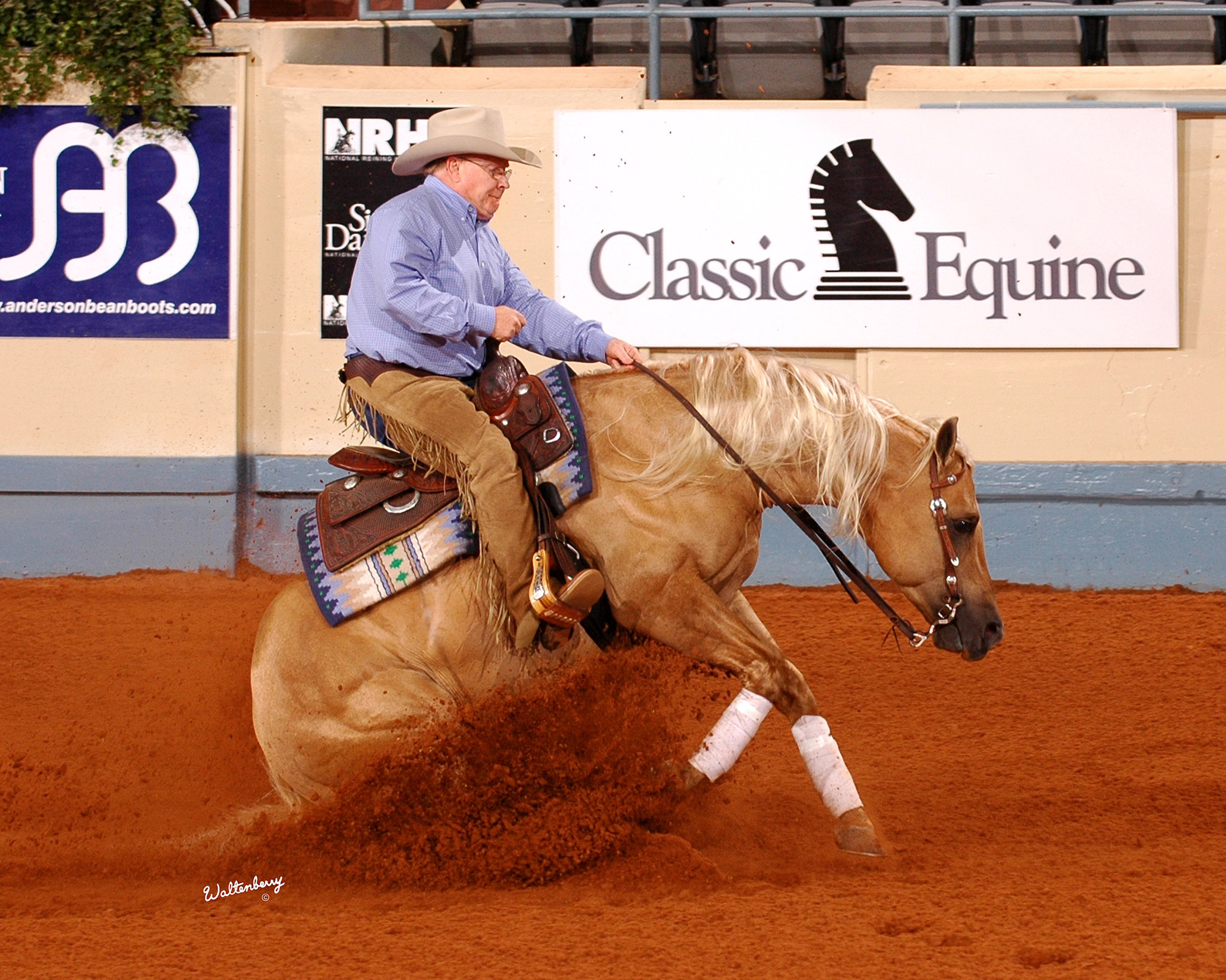 Quarter Horses For Sale In Texas With Photos Reining Horse S...