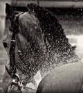La limpieza en el caballo