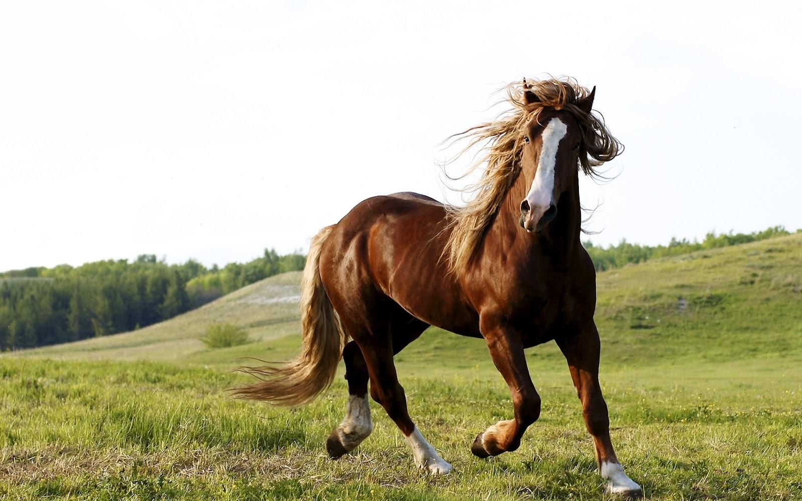 Fotos de caballos corriendo – I