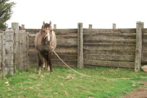 Coger a un caballo en el campo