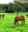 alimentacion-del-caballo