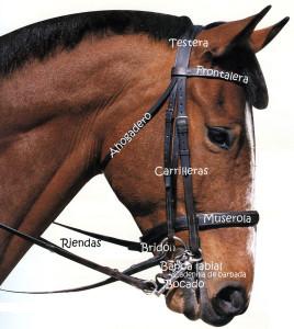 Cabezada colocada en un caballo