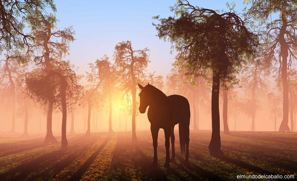 el mundo del caballo - Imagenes De Paisajes