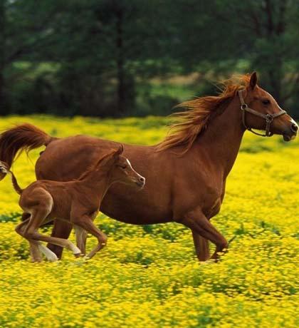 8-datos-curiosos-sobre-caballos-p