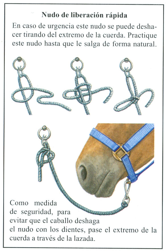 Atar a un caballo