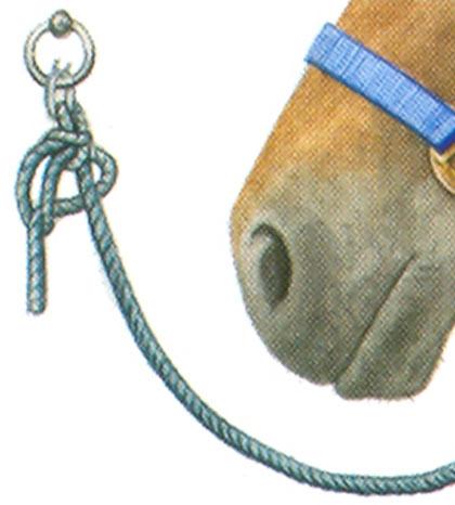 portada-atar-a-un-caballo