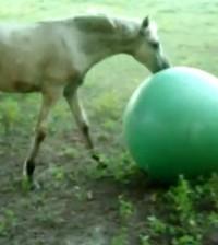 caballo-vs-pelota