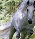 caballo-1