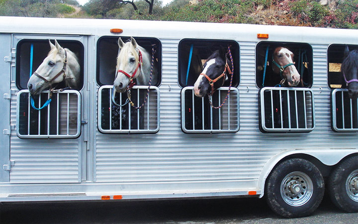 10 consejos para subir y transportar a tu caballo en remolque