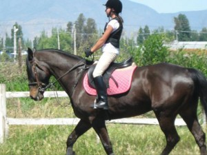 Cuando se prueba un caballo, hay que montarlo a pasos diferentes y de ser posible, hacer algún salto