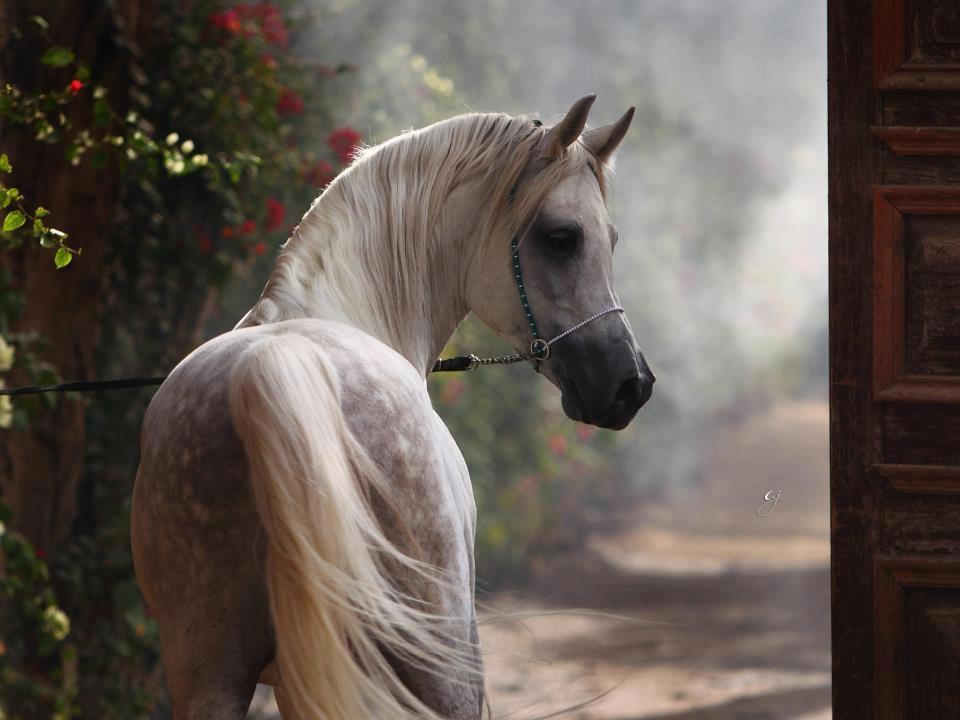 Belleza árabe - I
