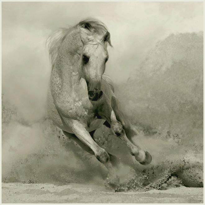 Caballos corriendo