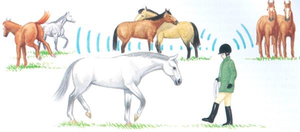 Cuando coja a un caballo, siempre esté atento a los demás y a lo que esté pasando entre ellos.