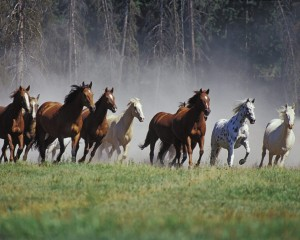 Diez hechos sobre caballos