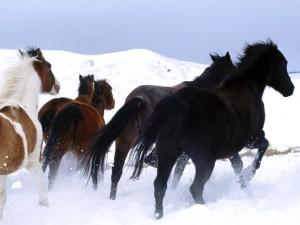 El caballo es un animal de 'huida'