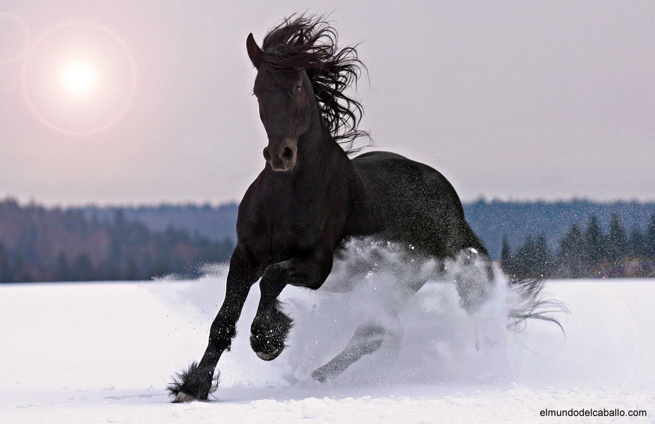 Fotografías de caballos
