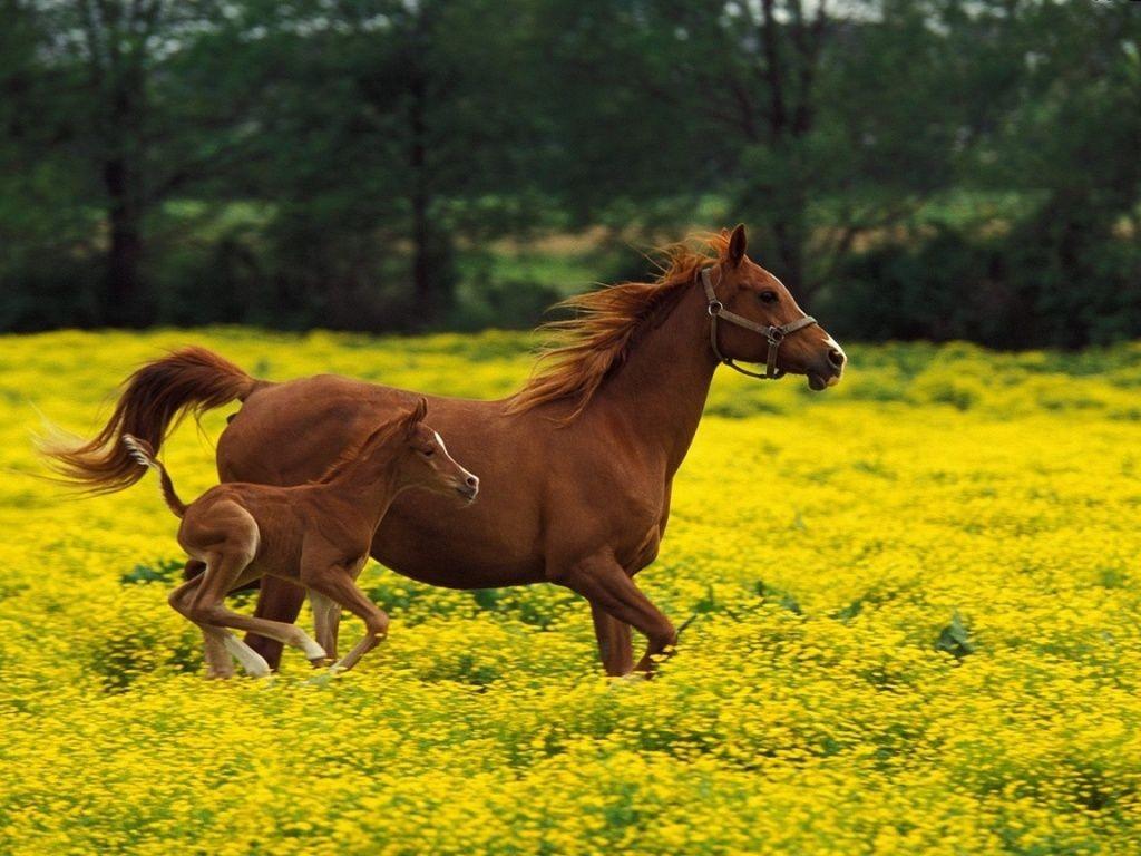 El caballo es capaz de correr a pocas horas de nacer