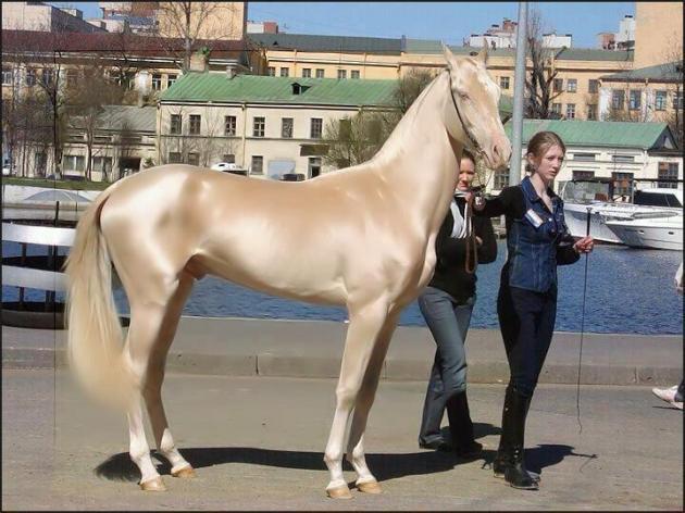¿El caballo más hermoso del mundo?